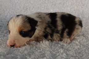 Puppy 16.jpg