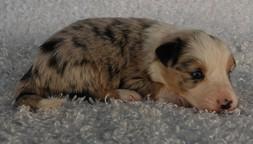 Puppy 18.jpg