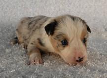 Puppy 12.jpg