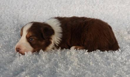 Puppy 17.jpg