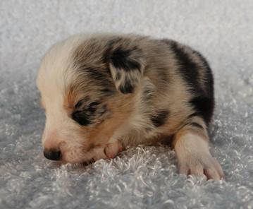 Puppy15.jpg