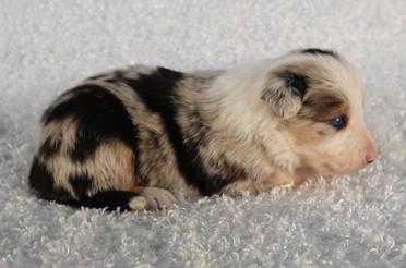 Puppy 8.jpg