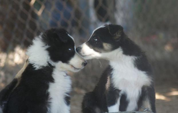 Cute Puppies.jpg