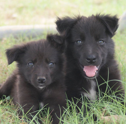 puppies together.jpg