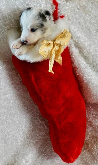 my boy 2 stocking.jpg
