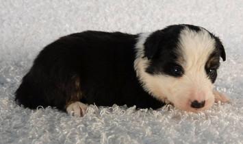 Puppy 7.jpg