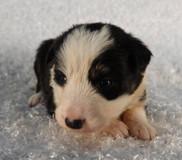 Puppy 10.jpg