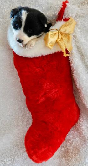Girls stocking.jpg