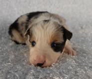 Puppy 9 .jpg