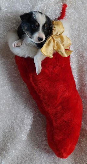 pretty Tri stocking.jpg