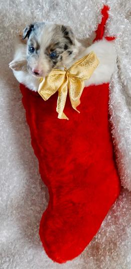 My boy stocking.jpg