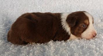 puppy 5 .jpg