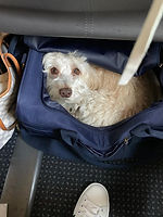 Pup 3.jpg