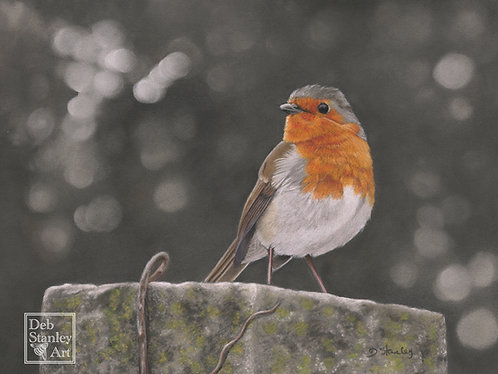 Robin Redbreast- Giclee Print