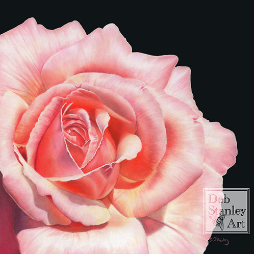 Rose in Pastels- Giclee Print