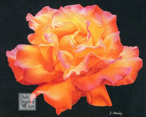 Flamboyant- Giclee Print