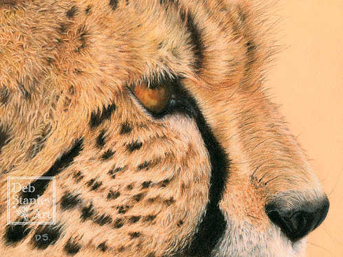 Willow, A Study - Giclee Print