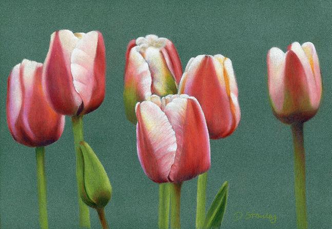 Tulips Edit rescan low mb.jpg