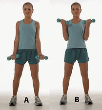 biceps-A1.jpg