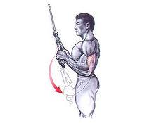 triceps-corda.jpg