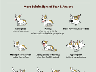 Fear in cats and dogs
