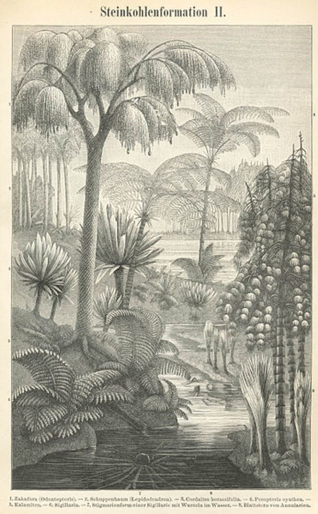 Ilustrasi tumbuhan yang hidup pada Zaman Karbon