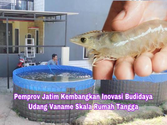 Pemprov Jatim Kembangkan Inovasi Budidaya Udang Vaname Skala Rumah Tangga