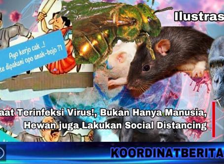 Saat Terinfeksi Virus!, Bukan Hanya Manusia, Hewan juga Lakukan Social Distancing