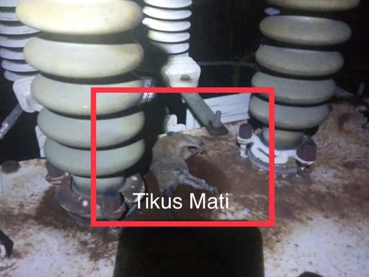 Sempat Dikira Bom, Ternyata Ledakan Trafo PLN Diakibatkan Tikus Mati