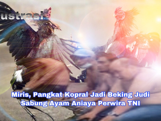 Miris, Pangkat Kopral Jadi Beking Judi Sabung Ayam Aniaya Perwira TNI