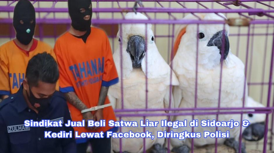 Sindikat Jual Beli Satwa Liar Ilegal di Sidoarjo & Kediri Lewat Facebook, Diringkus Polisi