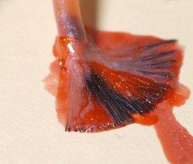 nail-polish-1187762.jpg