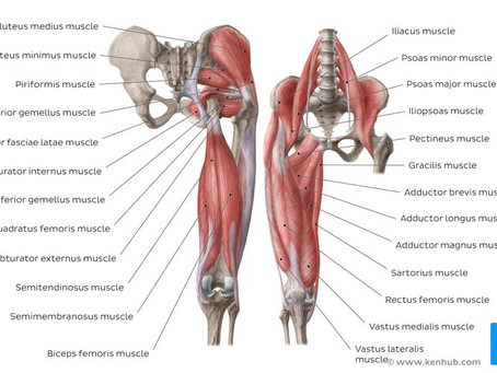 Hip Mobility, Do You Have Enough?