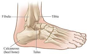 It's all in the Ankle