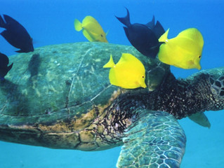 5 Interesting Facts about Sea Turtles