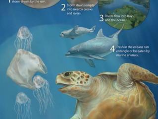 5 Ways to Help Save an Endangered Marine Animal on Cape Cod