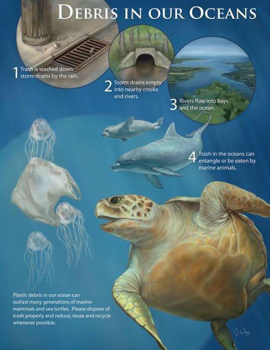 sea turtle conservancy.jpg