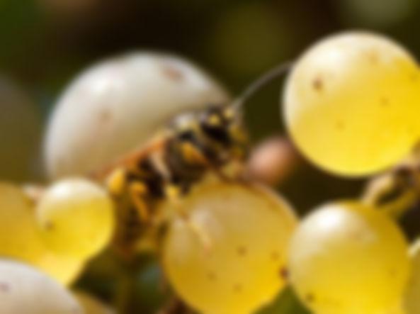 Wasp-kjo-U4315071747495VuG-1224x916_Corr