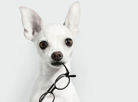 PupGlasses.jpg
