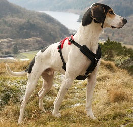 Perfect Fit Harness - Pointer Dog