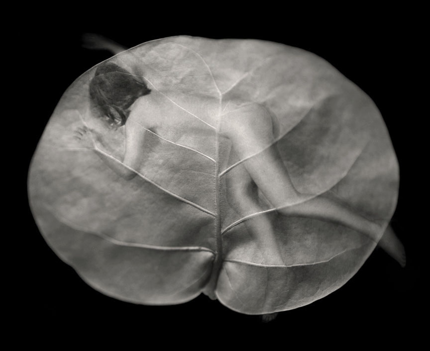 Myths_Untitled 2 (Sea Grape Leaf)