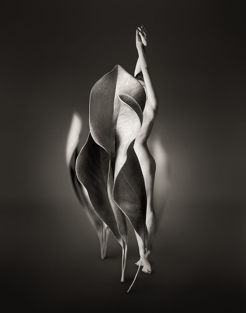 Myths_Untitled 6 (Magnolia Leaves)