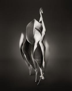 Myths_Untitled 6 (Magnolia Leaves)