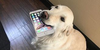 Dog-Phone-2048x1024.jpg