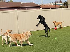 doggie daycare.jpg