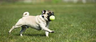 dog with ball.jpg