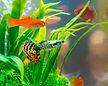 Petland_Texas_Aquarium.jpg