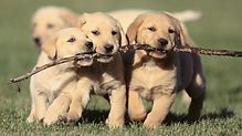 Puppy Protection Act.jpg