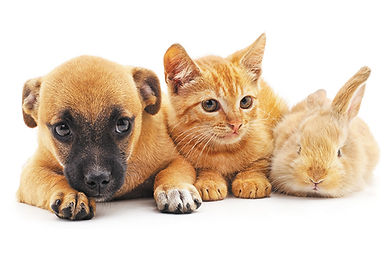 Dog-with-cat-and-bunny.jpg