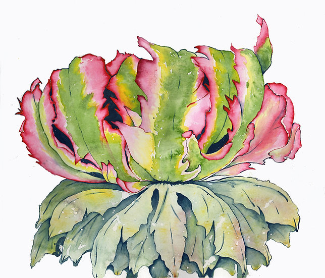 King French Tulip